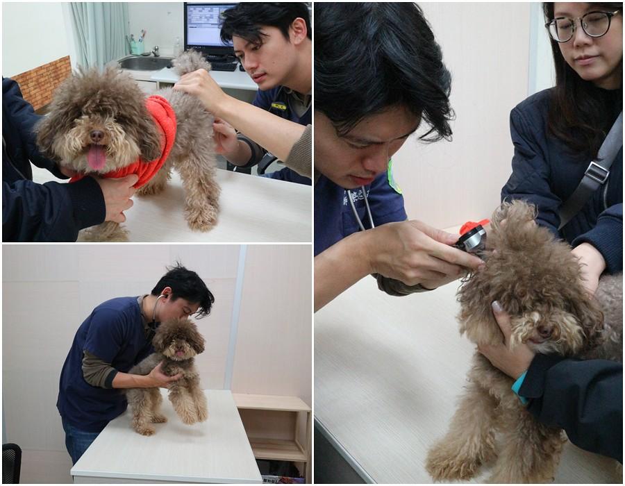 (寵物/健檢)新竹築心動物醫院-寵物健檢與傳染病檢查心得 @Nancy將的生活筆計本