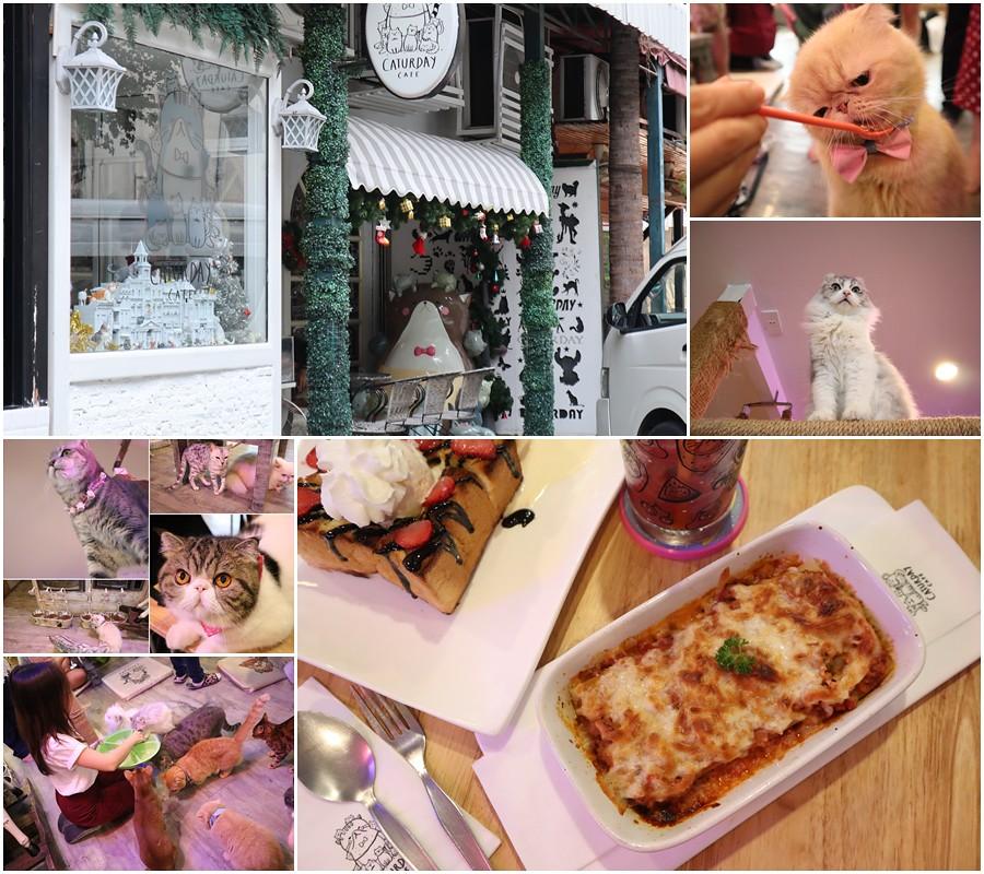 (泰國曼谷遊)Caturday cat cafe 貓咖啡廳泰國排行第一名的動物咖啡廳可愛的喵星人陪座檯吃飯-BTS Ratchathewi站(cocowalk商場) @Nancy將的生活筆計本