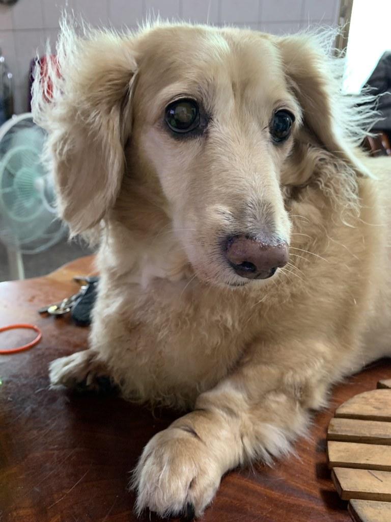 (寵物/醫療)臺灣動物寵物腫瘤治療懶人包,時時關心家中毛寶貝,讓牠陪你久久 @Nancy將的生活筆計本