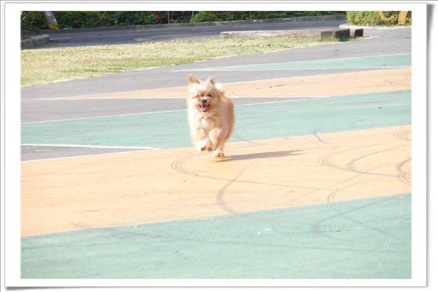 ((寵物))小寶~板橋435藝文中心跑跑跑 @Nancy將的生活筆計本