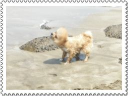 ((寵物))小寶vs啦大頭第一次玩水趣 @Nancy將的生活筆計本